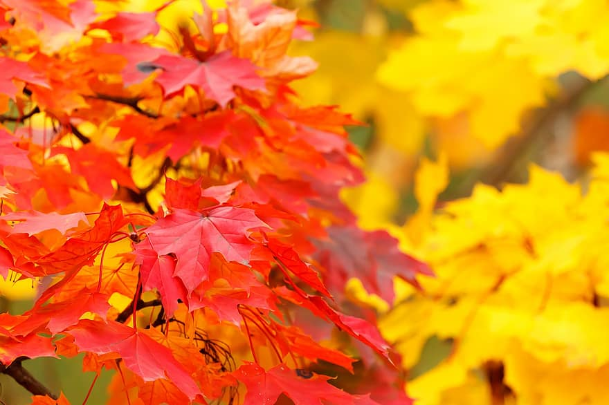 abstract-autumn-background-bright-color-fall-leaf-leaves-maple