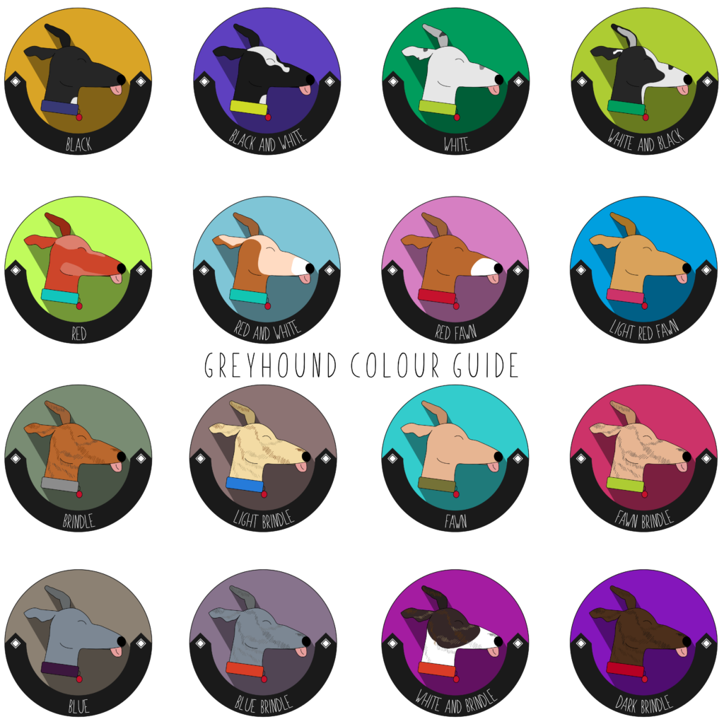 A variety of greyhound colours are pictured here.