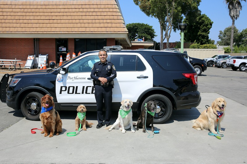 Chief of Police with Therapy Dogs