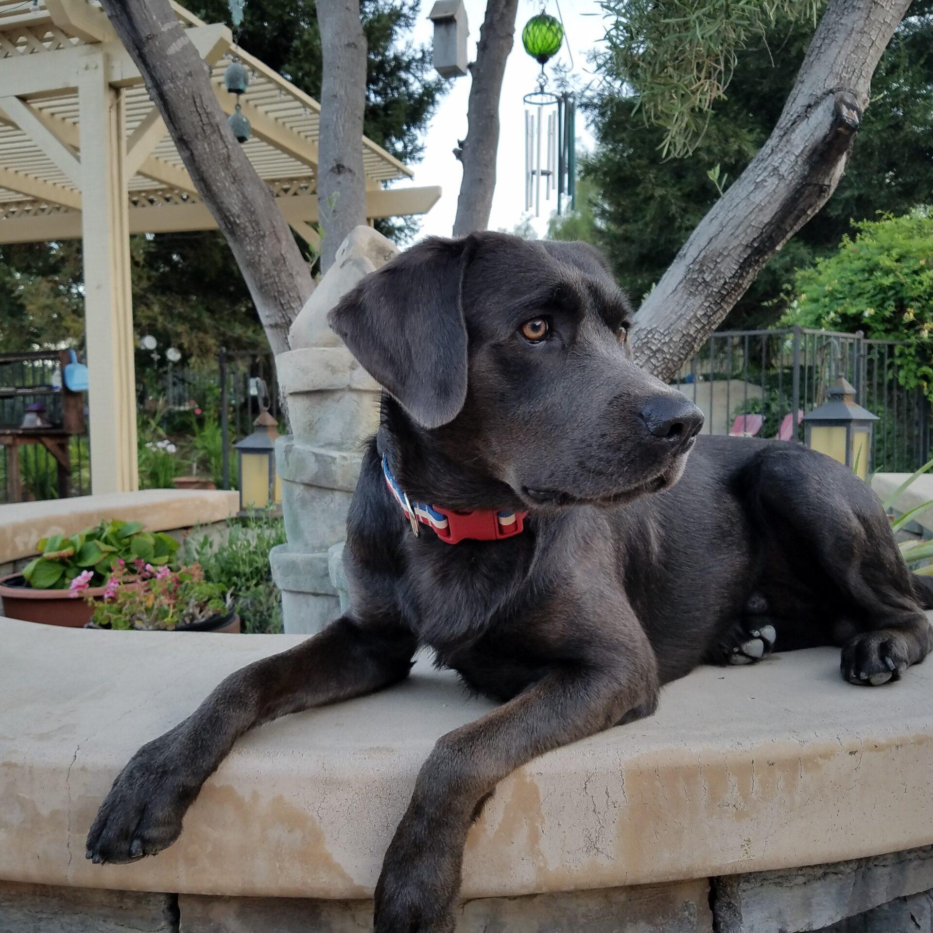 A black dog sitting on a planter.