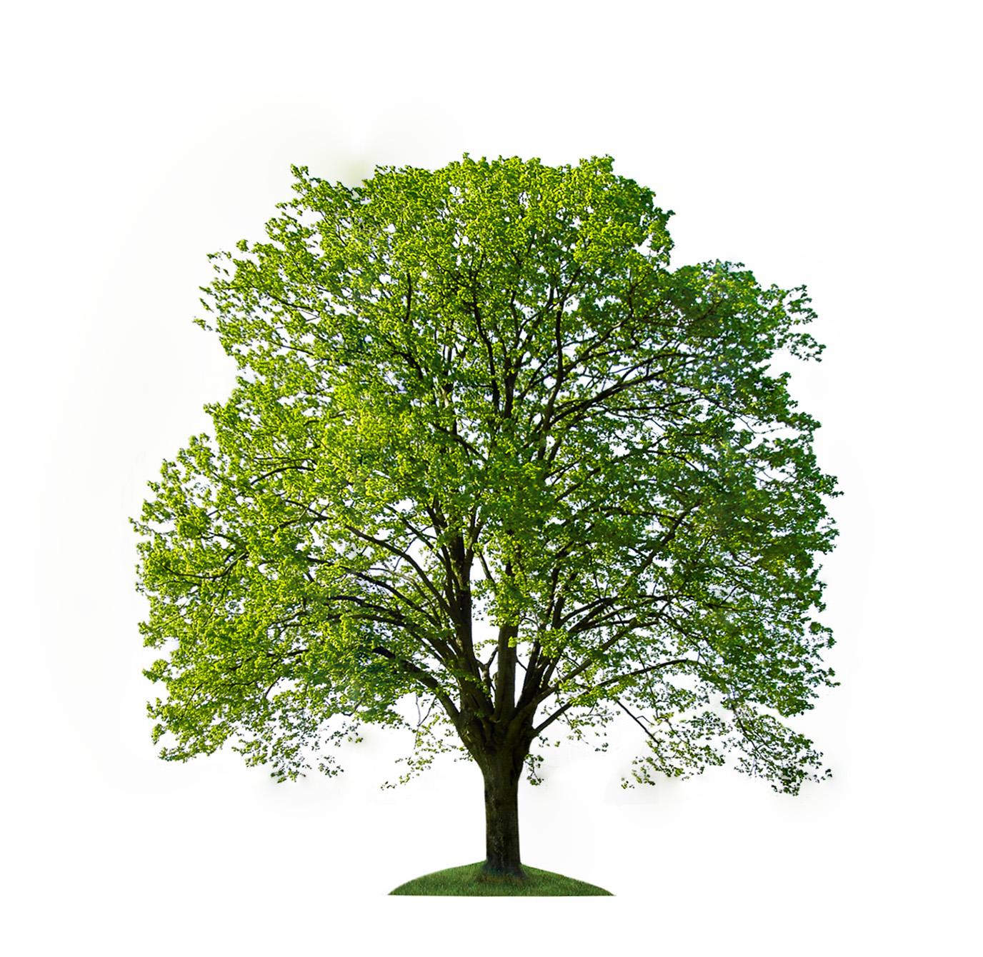 Hardwood Trees and Shrub Sale