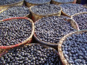 CAOH acai berries are pick fresh in the wilds of the amazon rain forest!