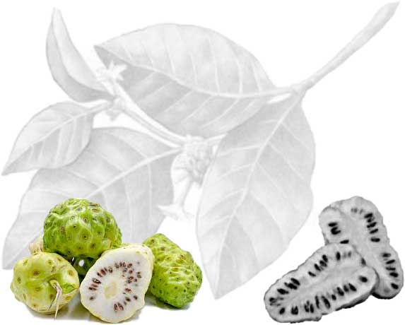 Noni juice: is not just for people, it's great for dogs too!