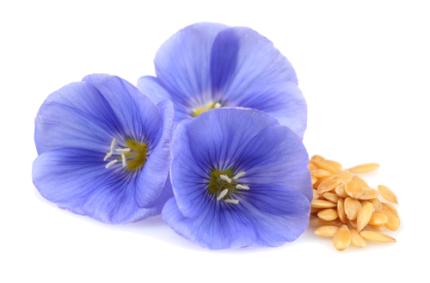 Does flax seed oil contain lignans?