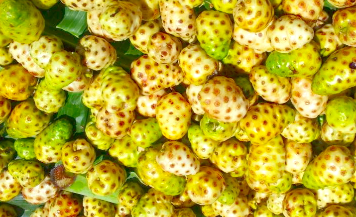 Diverticulosis, Breaking the Vicious Cycle and Noni Juice – The Perfect Treatment