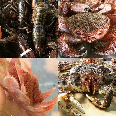Shellfish and Crustacean