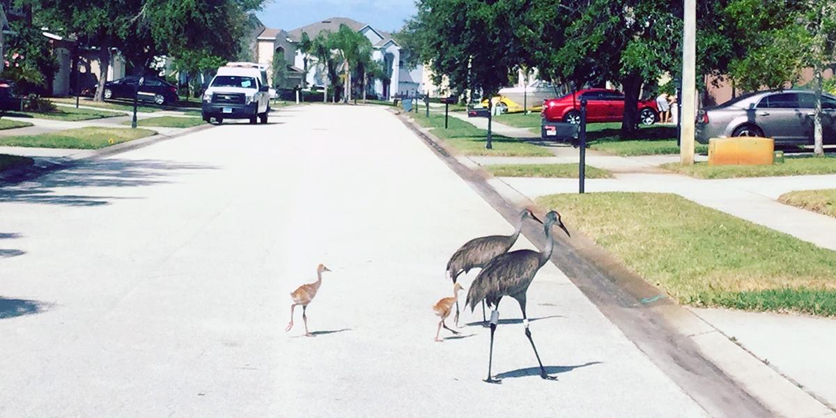 birds in middle of street in neighborhood