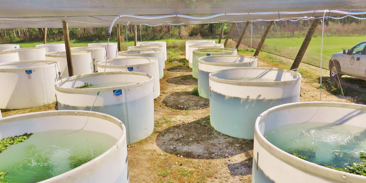 1,200-gallon tanks housing 36 largemouth bass