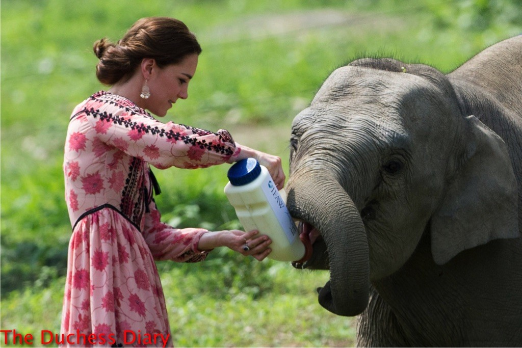 kate middleton makes sure baby elephant drinks