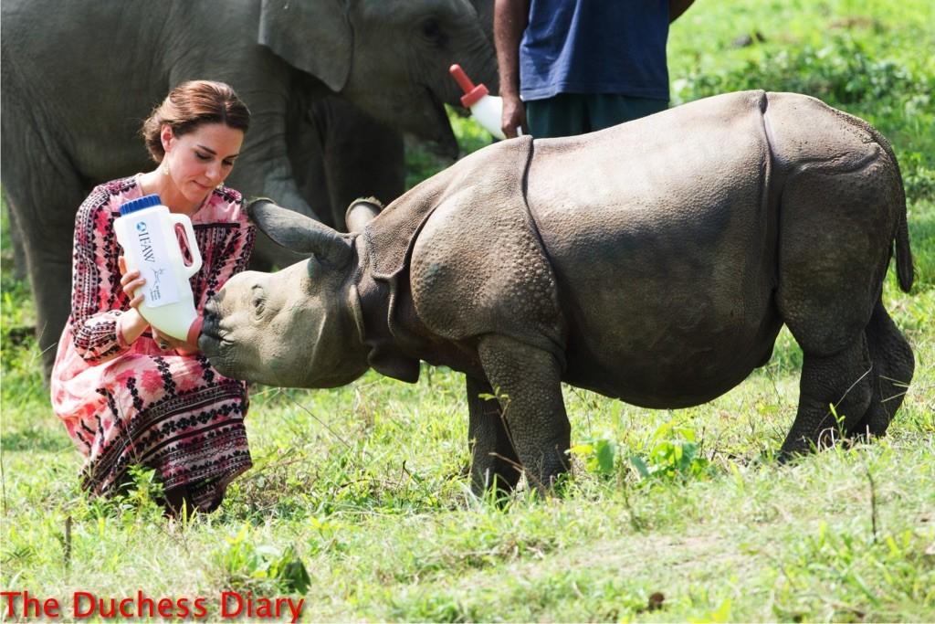 kate middleton gently feeds rhino kaziranga national park