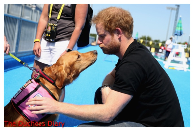 prince harry meets medical dog invictus games
