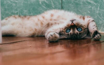 Of Cats and Contests