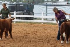 Jr-Bull-Calf-champion-and-reserve-champion-1
