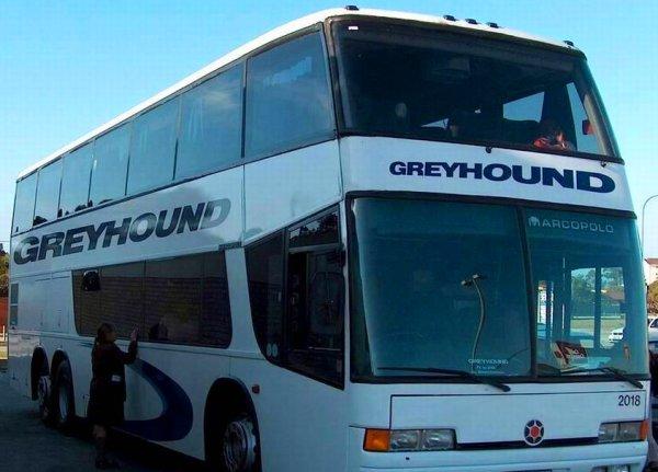 Greyhound shipping