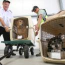 Shipping live animals