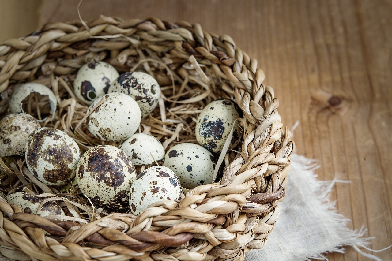 How to ship quail eggs