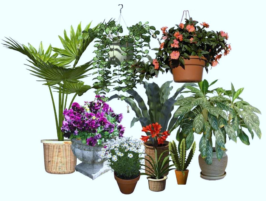 Shipping Live Plants