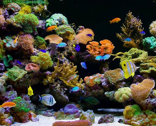 Ship Live Corals