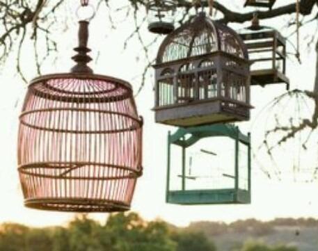 Ship a Bird Cage