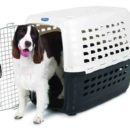 Shipping Pets - choosing pet kennel