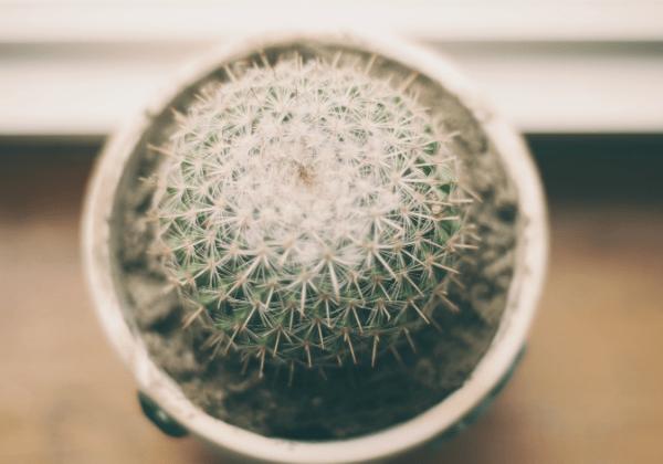 Ship a cactus plant
