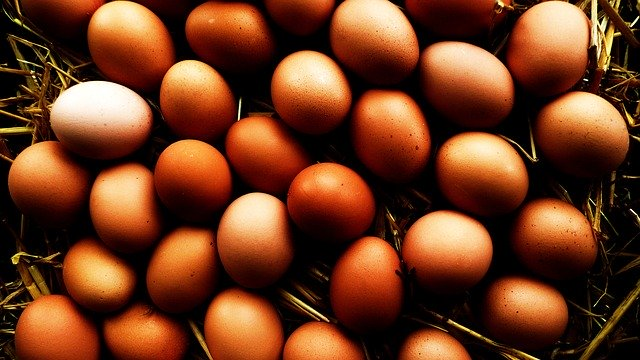 How to ship organic chicken eggs
