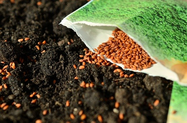 How to pack and ship seeds properly