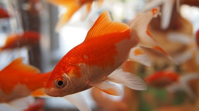 Shipping a Fish Tank