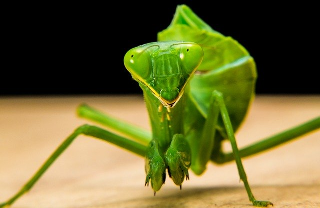 shipping a praying mantis