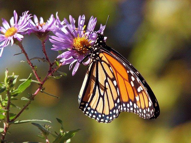 shipping butterflies