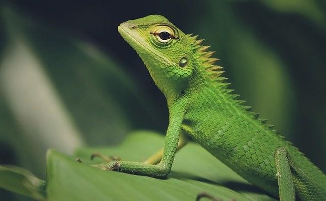 shipping reptiles