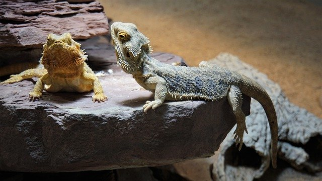 Shipping exotic pets