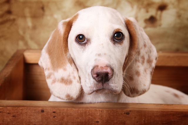 shipping a live dog