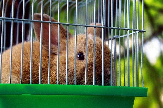 shipping rabbit