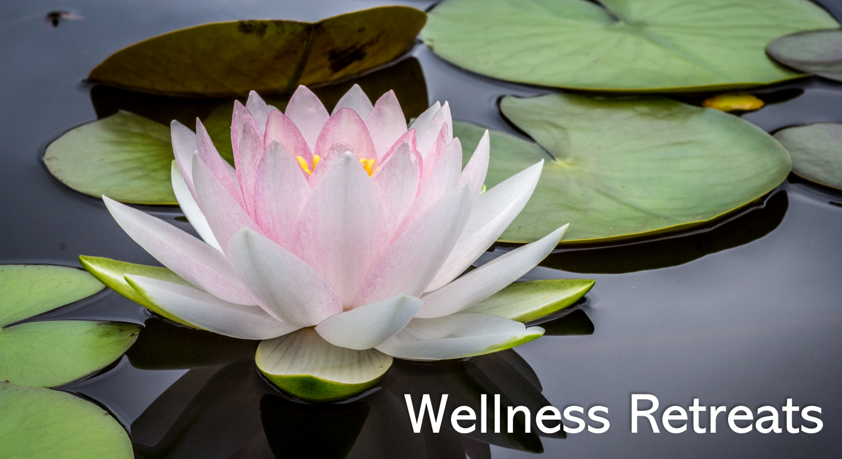 Wellness Retreats with Lani Visconti