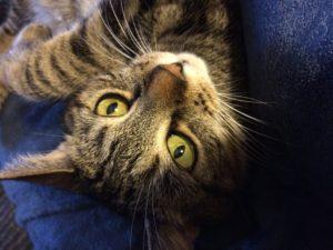 cat sitter boston