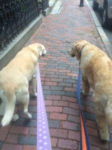 DogWalking_Sasha and Winnie