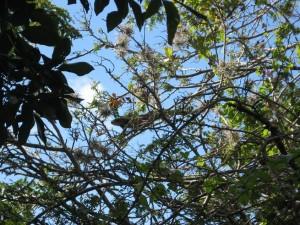 find the iguana