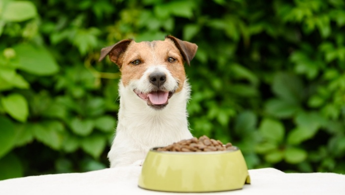 Cutting the Cost of Dog Food photo