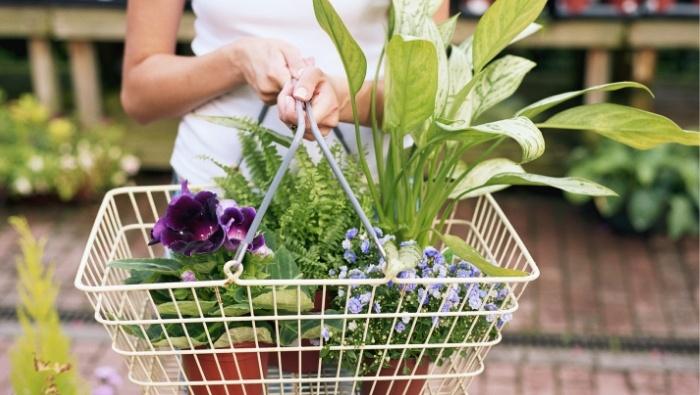 Summer Garden Maintenance Savings photo
