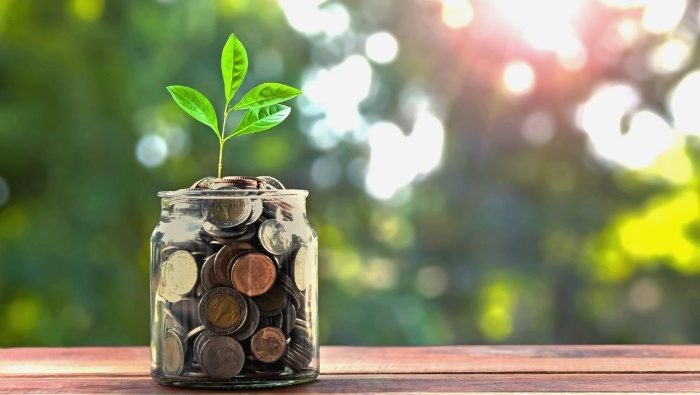 How to Grow a Money Tree photo