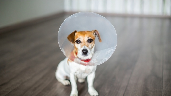 Reducde the Cost of Pet Healthcare photo