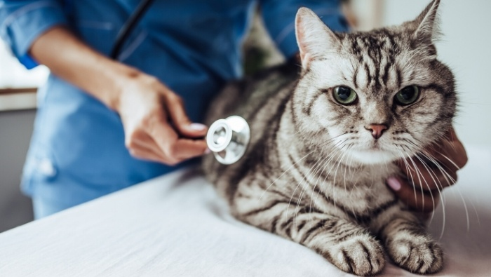 Ways to Make Vet Costs More Affordable photo