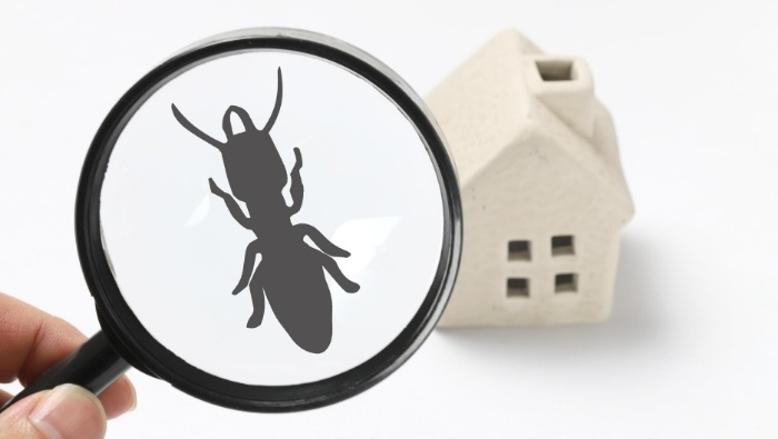 Affordable Do It Yourself Pest Control photo