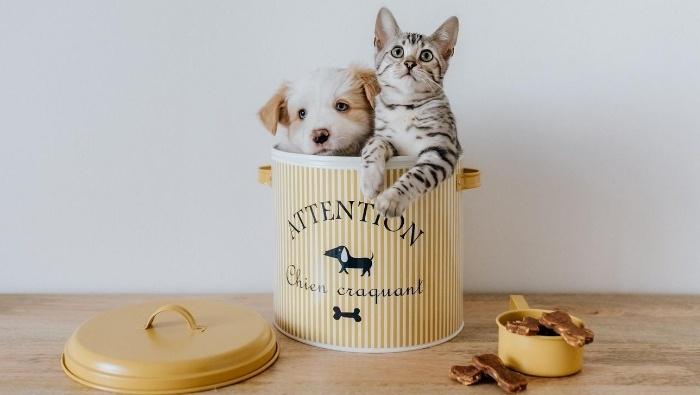 Simple Affordable Pet Treats photo