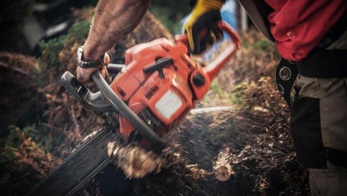 Free and Cheap Tree Removal Options photo