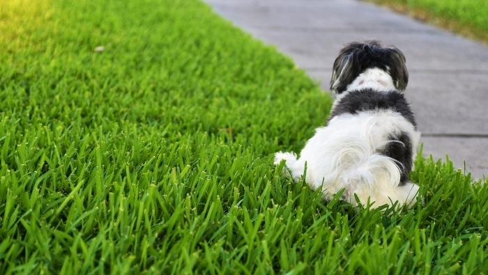 How to Keep Dogs Out of Yard photo