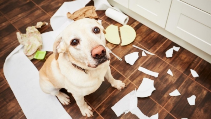 The Unexpected Costs of Dog Ownership photo