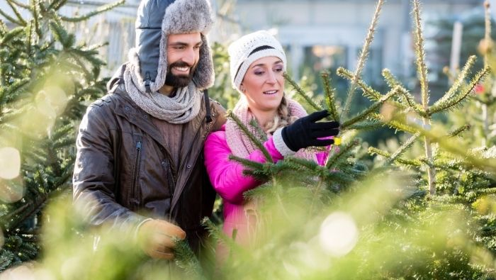 Get Your Money's Worth When Buying a Christmas Tree photo