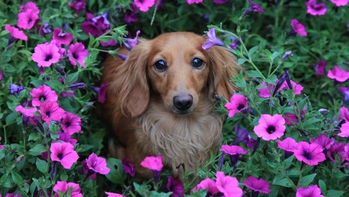 How to Keep Dos Out of Flower Beds photo